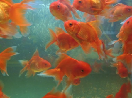 カンボジアの魚事情