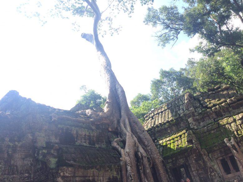 カンボジアに行くなら絶対に参加すべき!1日でカンボジアを味わえるツアー!